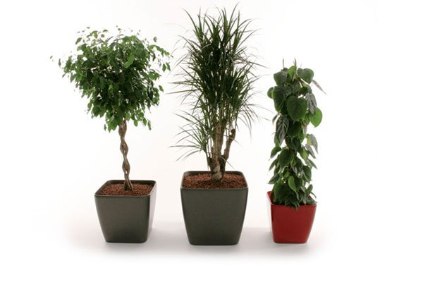 Ficus, Marginata and Philodendron