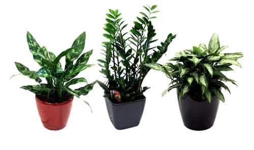 Office Plants Group
